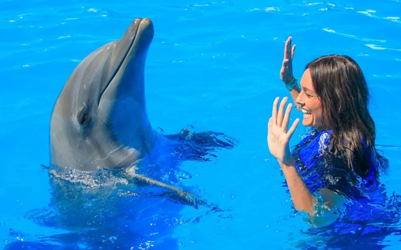 Дельфинарий в Доминикане