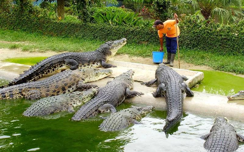 Фера крокодилов