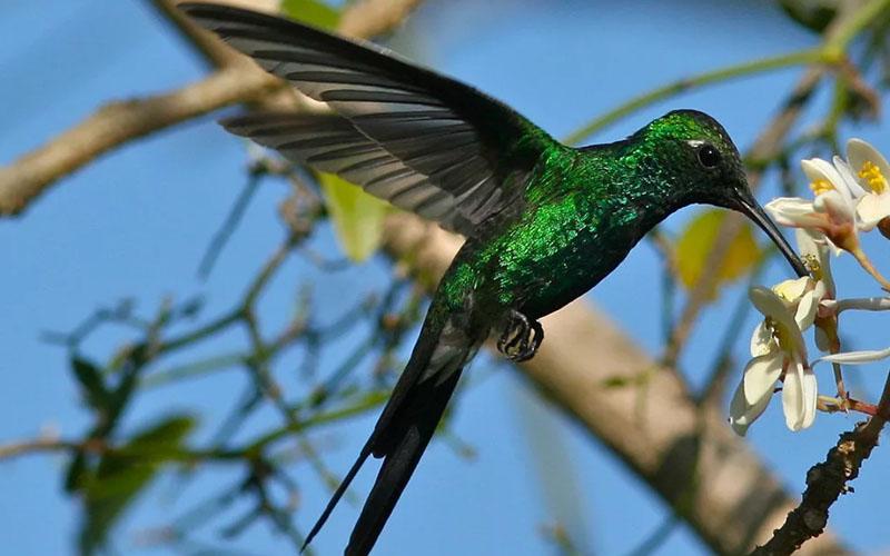 Дом птичек колибри