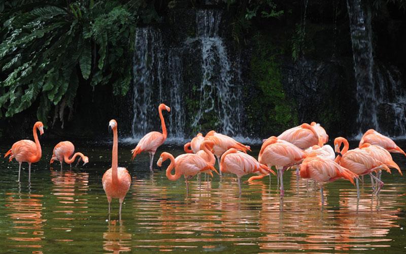 Манати парк - Фламинго