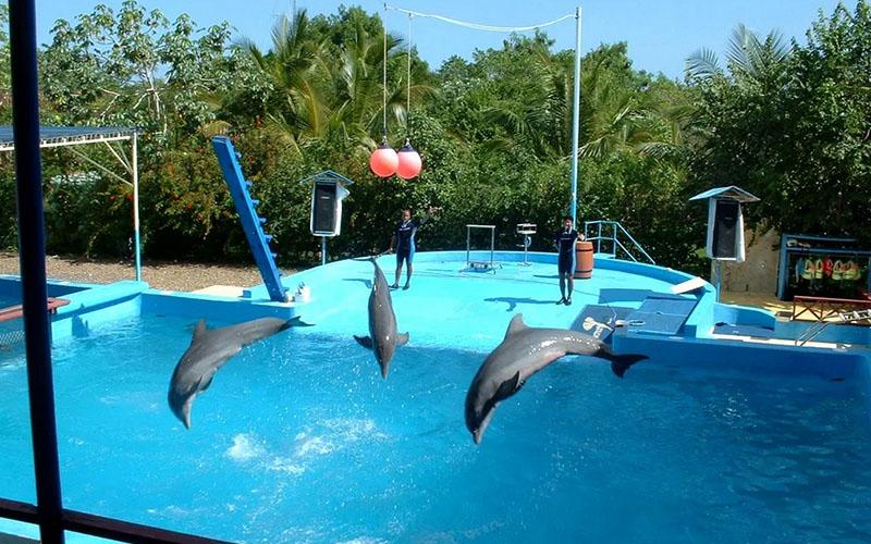 Дельфины в Доминикане