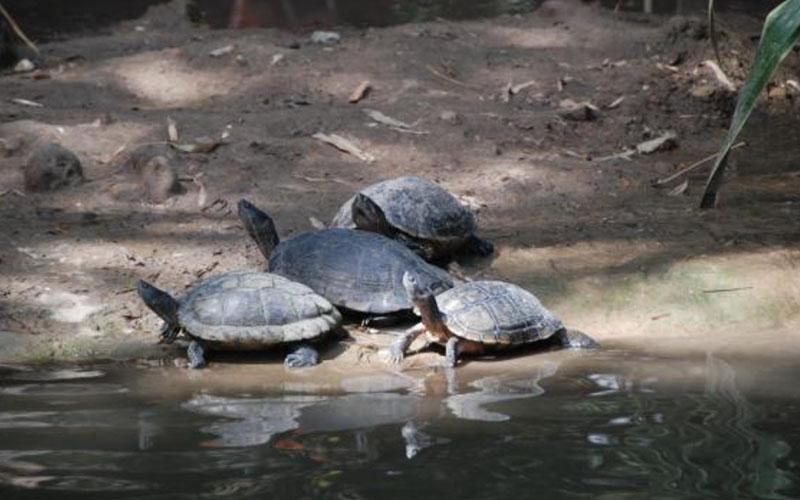Черепахив Manati Park