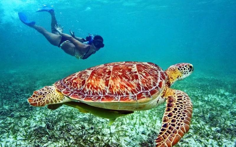 Снорклинг с морскими черепахами в Акумале