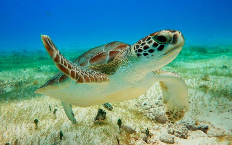 Снорклинг с морскими черепахами в Мексике